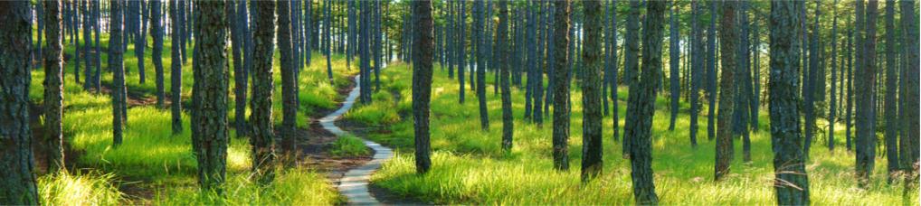 Waldweg im zentralen Hochland