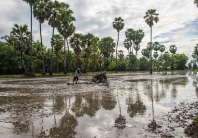 Feldarbeiter in Chau Doc