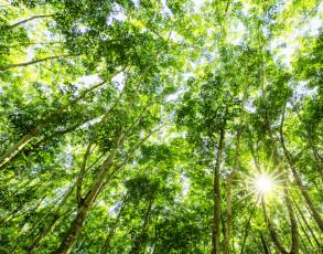 Baumkronen im Can Gio Mangrovenwald