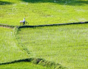 Landarbeiter mit Fahrrad an einem Reisfeld