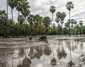 Feldarbeiter auf einem Reisfeld in Chau Doc