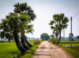Feldweg in Chau Doc
