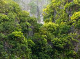 Grüne Felswand in der Halong Bucht
