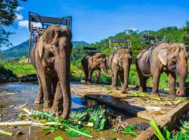 Elefanten in Buon Ma Thuat