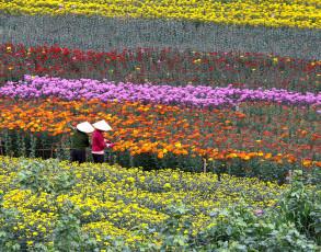 Blumenplantage im Hochland