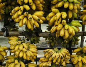 Bananenhändler